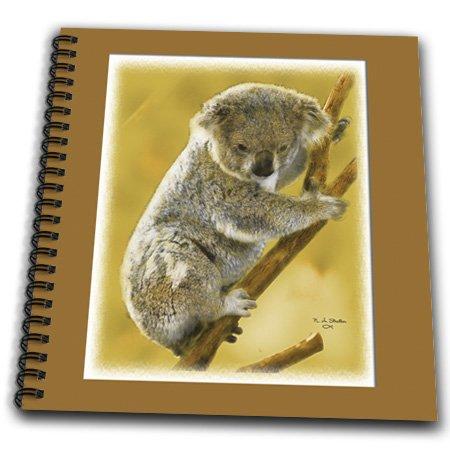 Baby Koala Images front-1041276