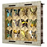 MIHO Butterfly Collection Display Cabinet