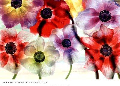 Vibrance by Harold Davis - 36x26 Inches - Art Print Poster