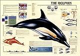 イルカ [HB-3005] [ポスター]