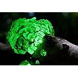 how to get glowing mushroom seeds terraria