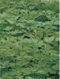 Just Seed - Vegetable - Parsley - Plain Leaf - 2500 Seeds