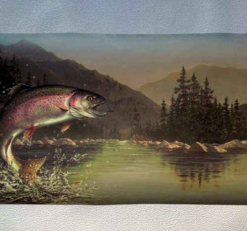 rainbow trout wallpaper wwwimgkidcom the image kid