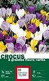 Ernest TURC Pack de 50 Bulbes Crocus Varies Calibre Multicolore 13,5 x 7 x 23 cm 120186