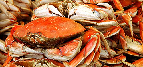 FRESH Cooked DUNGENESS CRABS (6 Large Crabs)