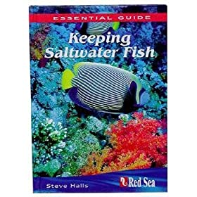 The Essential Guide To Keeping Saltwater Fish