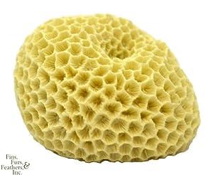 Deep Blue Professional ADB80031 Brain Coral for Aquarium, 3 by 2.5 by 2-Inch