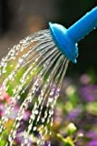 Water Pouring from Blue Watering Can onto Blooming Flower Bed - 42