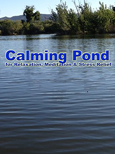 Calming Pond for Relaxation, Meditation & Stress Relief