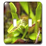 Danita Delimont - Plants - USA, California, San Marino. Venus Flytrap plant - Light Switch Covers - double toggle switch (lsp_230168_2)