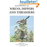Wrens, Dippers and Thrashers