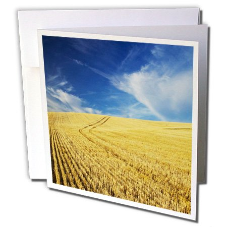 Danita Delimont - Farms - Farm Fields, Harvest Wheat, Palouse, Washington, USA - US48 TEG0425 - Terry Eggers - 12 Greeting Cards with envelopes (gc_148727_2)