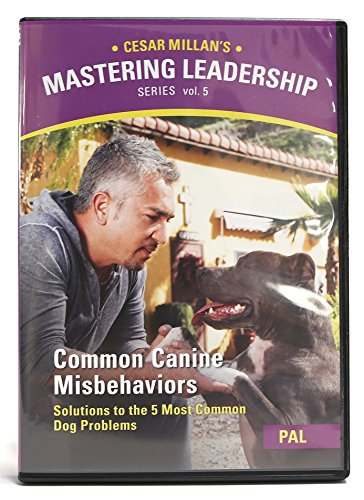 Cesar Millan Training Dvd Sale | Up to 70% Off | Best Deals TodayMobile Freindly · Special Holiday Deals · Best Of The Best · Compare Before You Buy.