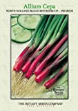 North Holland Blood Red Redmate (250) Seeds - Spring Onion - Allium Cepa