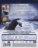 Image de Mission Wale: das Leben der Wale [Blu-ray] [Import allemand]