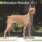 Miniature Pinscher Dogs Calendar 2014 (AvonSide) + Acrylic Blank Fridge Magnet
