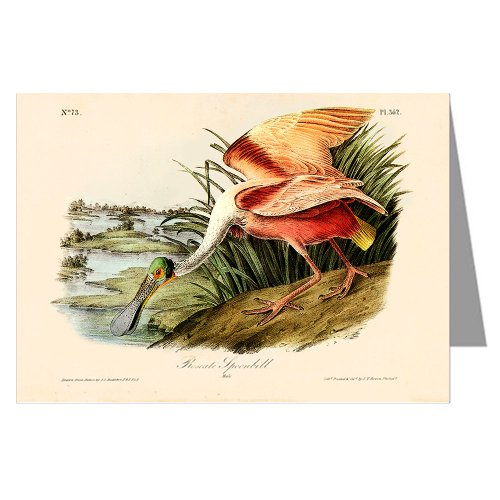 6-greeting-cards-di-john-james-audubon-s-celebrata-illustrazioni-di-birds-of-north-america-cucchiaio