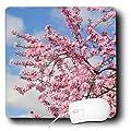 3dRose LLC 8 x 8 x 0.25 Inches Pretty Cherry Blossom Spring Tree, Mouse Pad (Mp_130677_1)