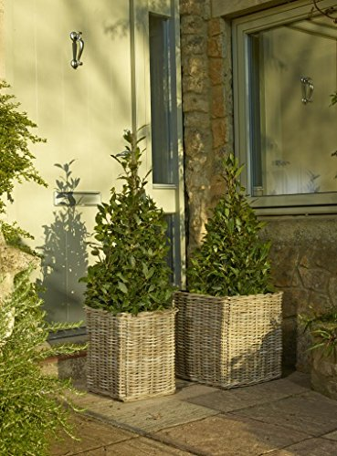 Set Of Two Kubu Willow Square Planters - Soft Grey
