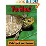 Turtles! Learn About Turtles and Enjoy Colorful Pictures - Look and Learn! (50+ Photos of Turtles)