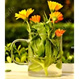 2/pcs Lot Clear Glass Vase Wedding Props Straight Cup Vase With Floral Table Flower Vase Floor Vase Road Lead...