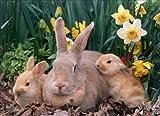 The Care-Feeding-Breeding Of Rabbits