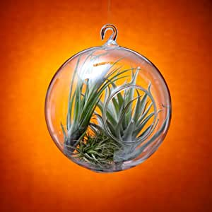 Hanging Terrarium 6 Inch (Plants Not Included)
