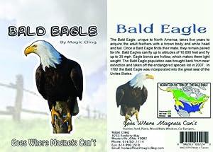 Bald Eagle Wall Decal - Realistic Bald Eagle Decor - Window Car Fridge Wall Sticker