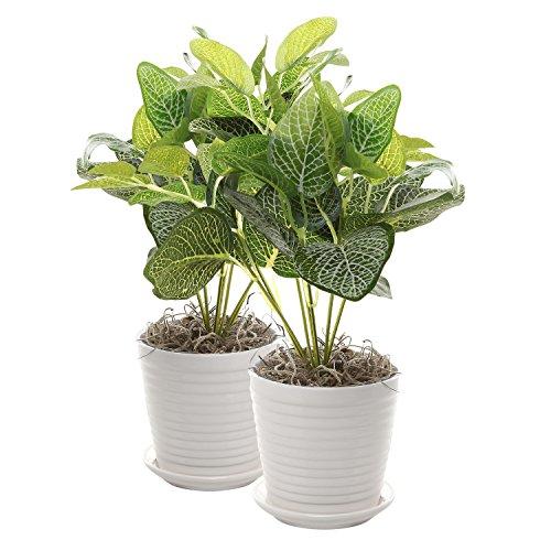 Set of 2 White Ceramic Ribbed Design Round Succulent Plant Pots / Small Decorative Herb Planters