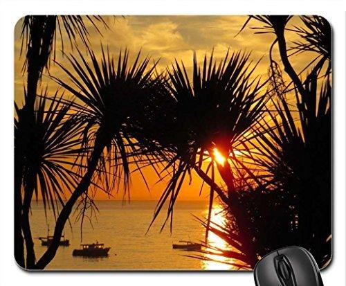 st-ives-cornwall-le-soir-de-soleil-crepuscule-sur-locean-cordyline-plages-palmiers-tapis-de-souris-t