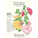 Hollyhock Chaters Double Seeds 100 Seeds