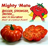 Mighty 'Mato Grafted Costoluto Genovese Tomato Plant - Easy to Grow/More Fruit