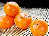 30 pezzi di frutta cachi Alberi Piante succulente semi Cachi frutta