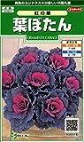 サカタのタネ 実咲花6918 葉ぼたん 紅の華 00906918