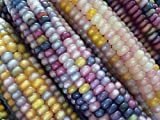 鹿児島産 グラスジェムコーン glass gem corn マルシェ赤坂で栽培採取種子 (20粒)
