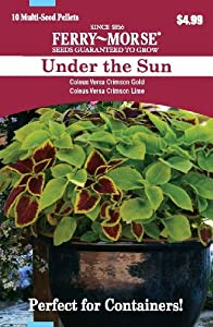 Ferry Morse 2175 Container Combinations, Coleus-Under the Sun