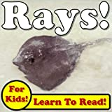 Rays! Learn About Rays While Learning To Read - Rays Photos And Facts Make It Easy! (Over 45+ Photos of Rays)