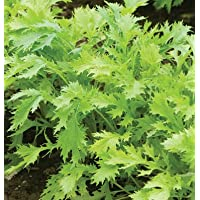 Asian Greens Kyoto Mizuna D3044A (Green) 200 Seeds by David's Garden Seeds
