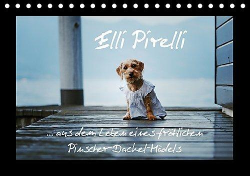 elli-pirelli-aus-dem-leben-eines-frohlichen-pinscher-dackel-madels-tischkalender-2017-din-a5-quer-au