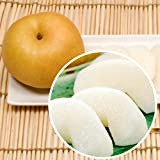 【秀品】熊本産 梨(豊水・あきづき・新高) 5kg(9~16玉入り) 3,198円 ランキングお取り寄せ