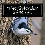 img - for The Splendor of Birds: A Picture Book for Seniors, Adults with Alzheimer's and Others (Picture Books for Seniors, Alzheimer's Patients, Adults with ... and Others; A 'No Text' Book) (Volume 5) book / textbook / text book