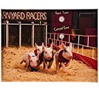 Racing Piggies Canvas Print - 12x16