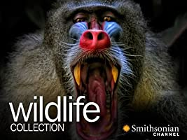 Wildlife Collection Season One