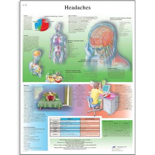 3B Scientific Glossy Paper Headaches Anatomical Chart - 1