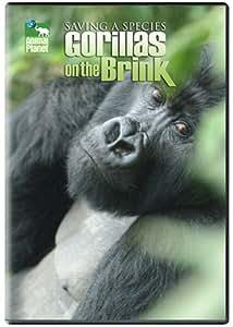 Saving a Species: Gorillas on the Brink