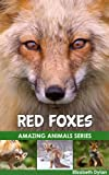 Red Foxes - Amazing Animals