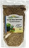 Organic Hard Red Wheat Seed- 1 Lbs (16 Oz.)- Grow Wheatgrass, Flour, Grain & Bread, Emergency Food Storage, Ornamental Wheat Grass, More- Excellent Germination