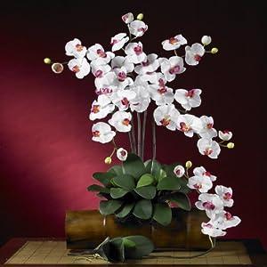 Real Looking Phalaenopsis Silk Orchid Flower w/Leaves (6 Stems) White Colors - Silk Flower