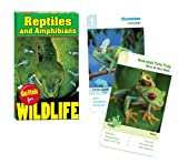 Go Fish for Wildlife: Reptiles and Amphibians