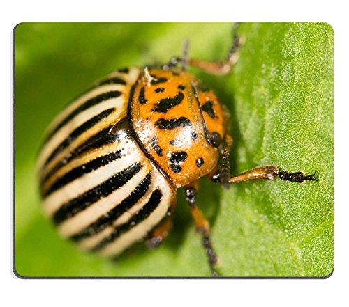 luxlady-gaming-mousepad-id-39777597-colorado-potato-beetle-on-a-green-leaf